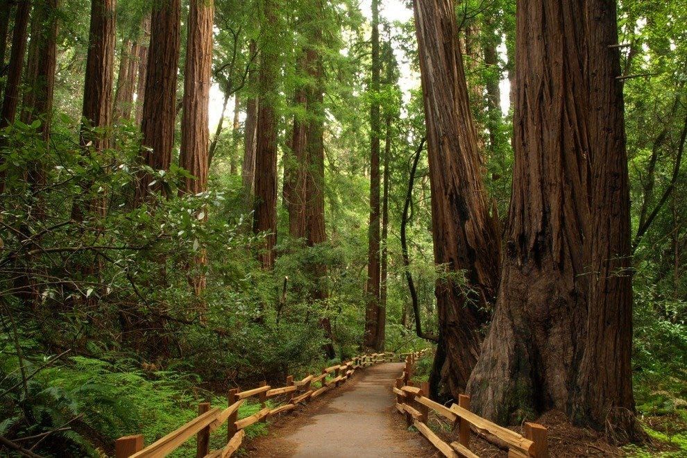 Experience Nature S Cathedral In Muir Woods
