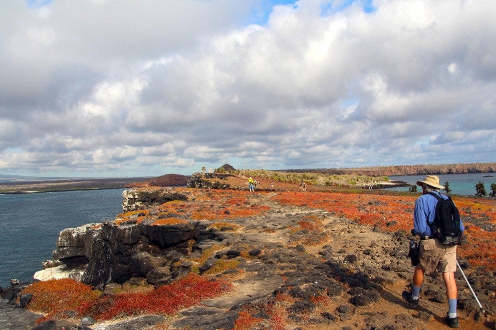 Hiking through sesuvium fields, North Seymour Island