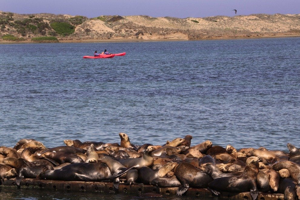 Kayak through Pristine Nature: Elkhorn Slough