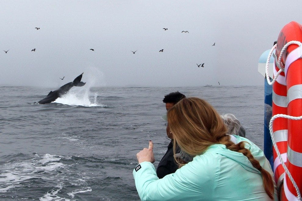 Marine Sanctuary Teems with Whales