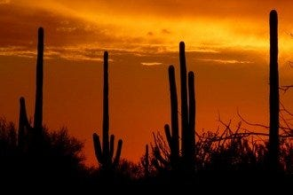 A Scenic Drive through Tucson: From Downtown to Desert