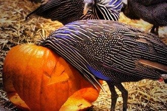 Halloween Nights at Dallas Zoo: Treat Yourself to Family-Friendly Scares