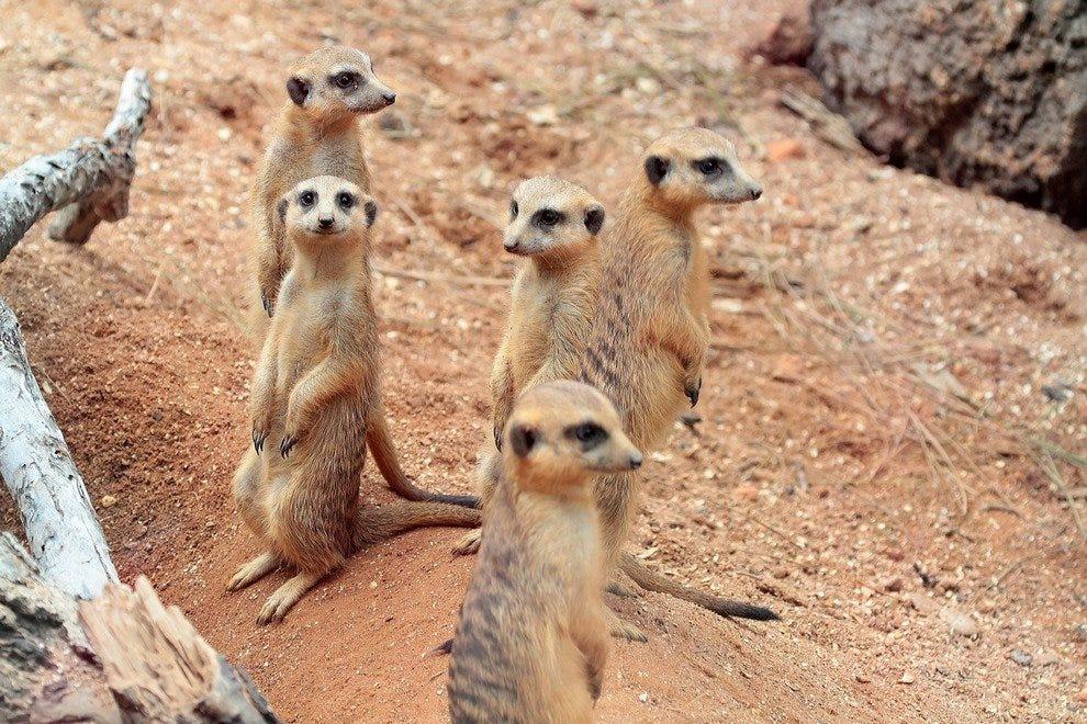 布里瓦德动物园