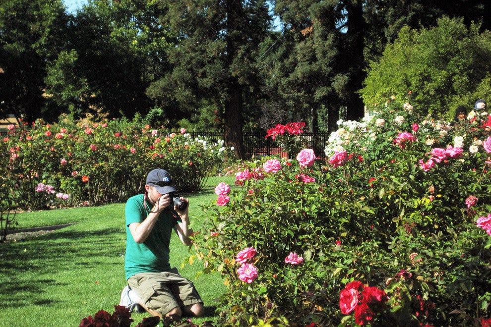 san jose municipal rose garden san jose calif - Pictures Of Rose Gardens