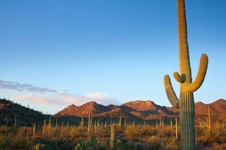 10 Best Sightseeing Spots in Tucson: Don't Miss These One-of-a-Kind Destinations