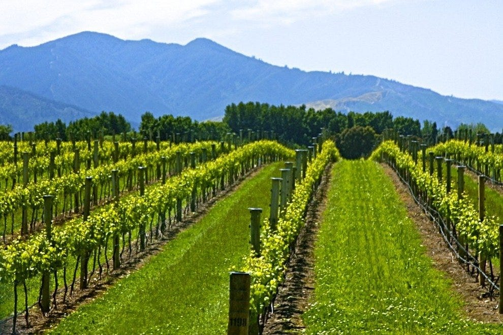 Sauvignon blanc from New Zealand is a standout wine, often called one of the most drinkable.