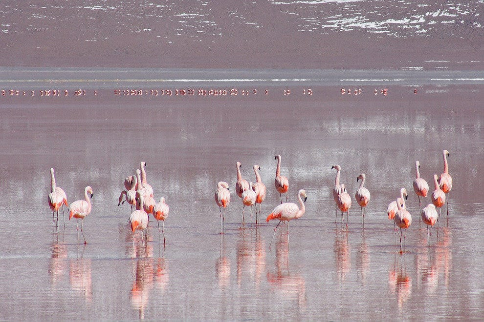 Flamingo Fun at Laguna Colorada in Bolivia