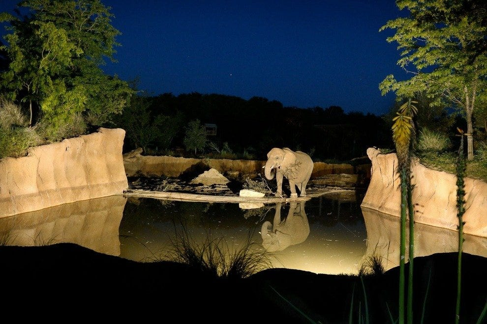 Dallas Zoo at night