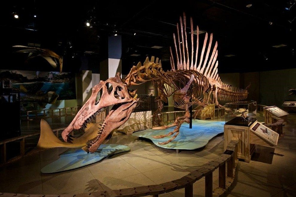 A full-sized skeletal model of a Spineosaurus is now on display at the National Geographic Museum
