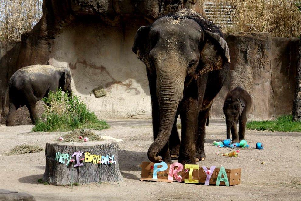 What Do Jaguars Eat >> Saint Louis Zoo: St. Louis Attractions Review - 10Best ...
