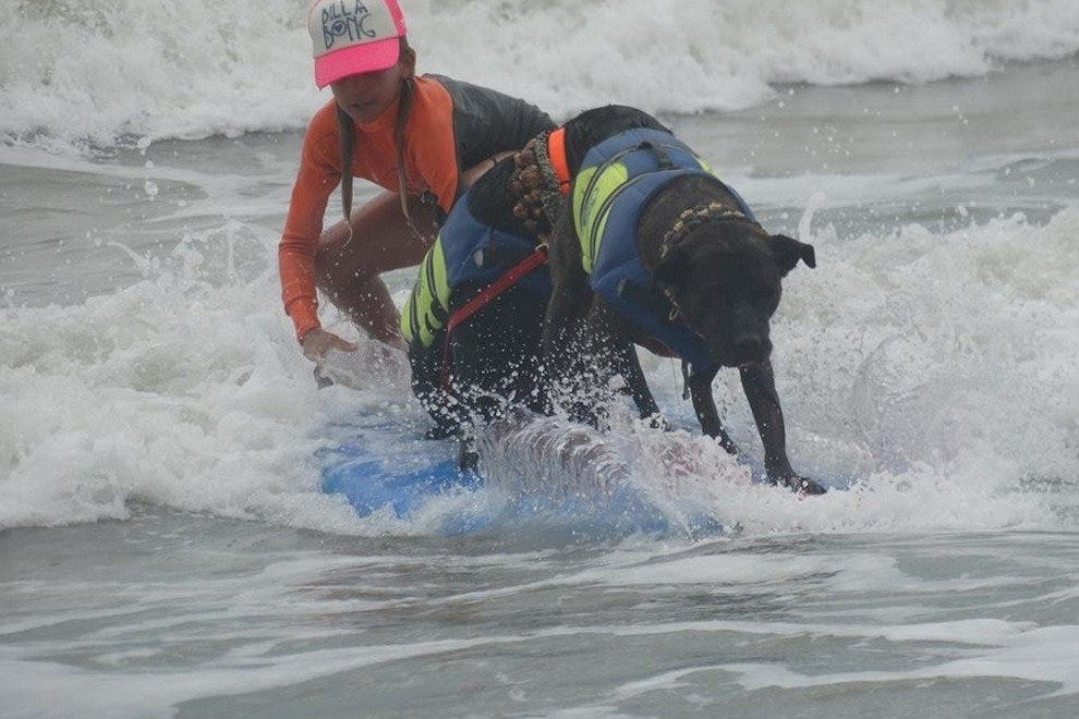 Florida International Dog Surfing Championship