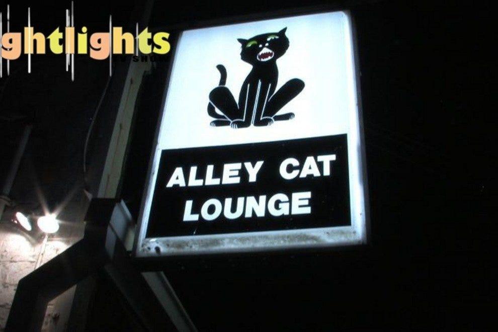野猫休息室