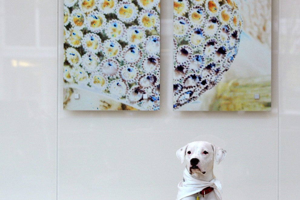 The Fairmont Pittsburgh is filled with art and is dog friendly. Edie, their gentle mascot, would love to play with your pup.