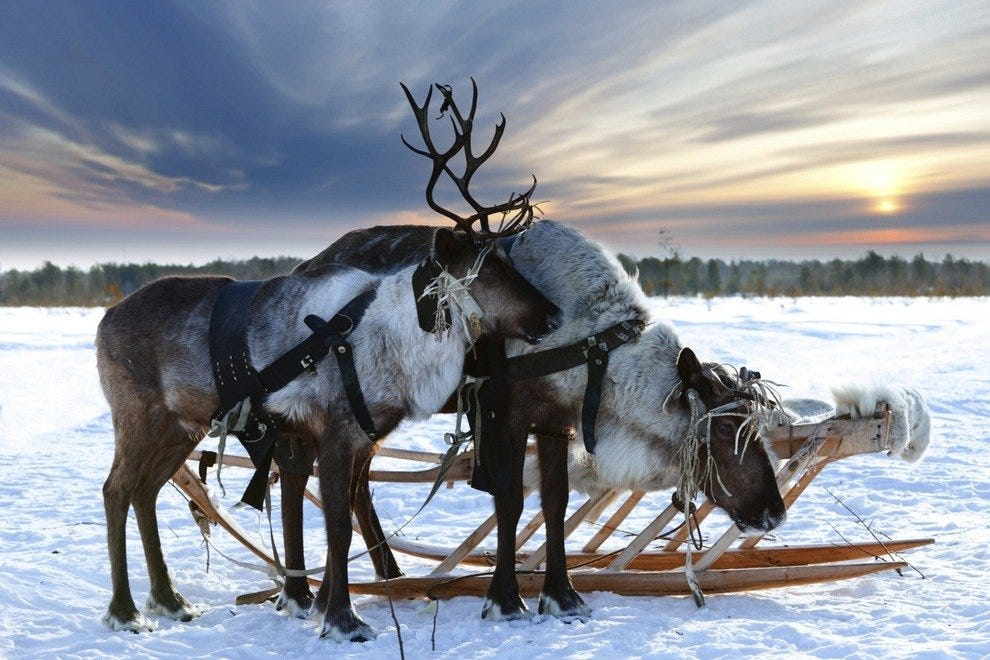 Surprising Facts about Reindeer