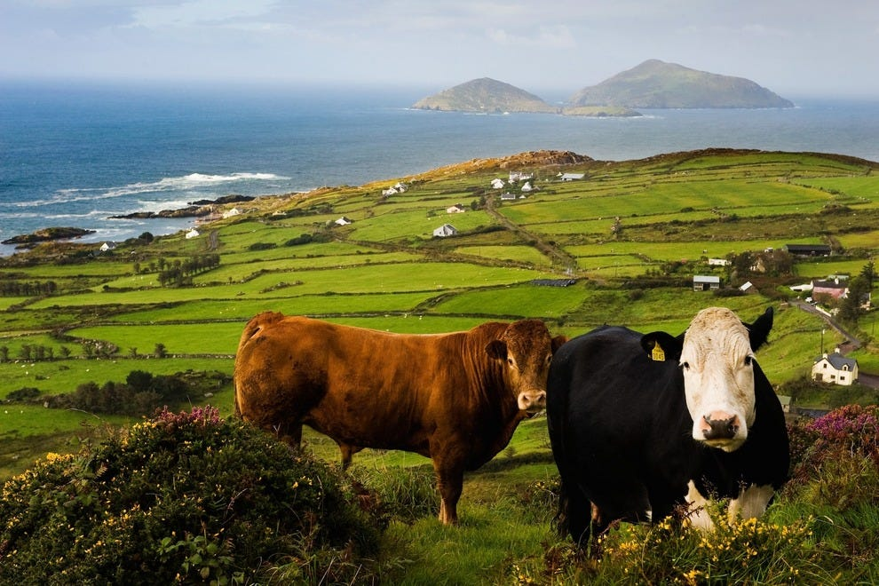 Irish luck will take you to the magical Ring of Kerry. Actually, it's good planning that gets you there.