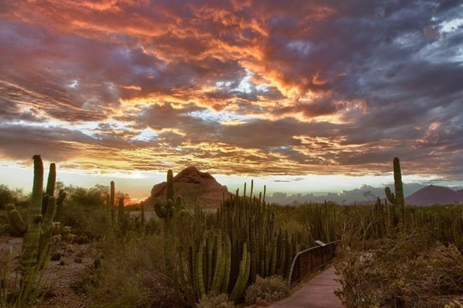 Romancing the Desert: 10 Romantic Things to Do in Phoenix