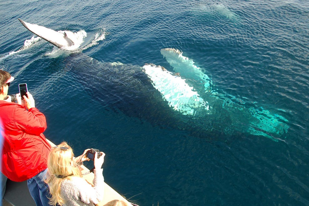 Whale watching in los angeles with marina del rey for Marina del rey fishing