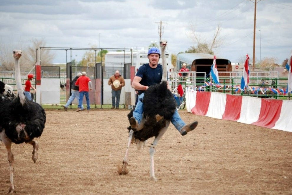The Chandler Ostrich Festival, featuring the popular ostrich races, is held every March