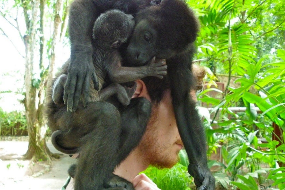 Mama howler monkey with her newborn baby howler