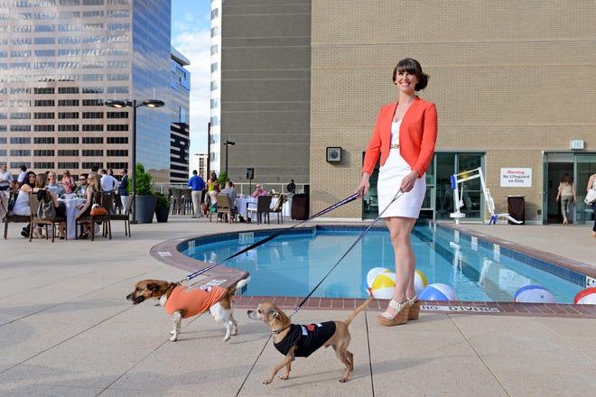 Hotel Slideshow Pet Friendly Hotels In Denver