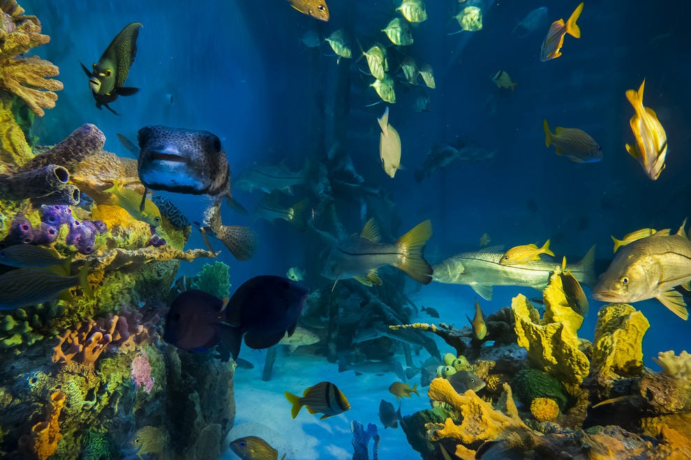 Guy Harvey RumFish Grill & Bar's Swim with the Fishes program gives diners a chance to take a dive in the tank