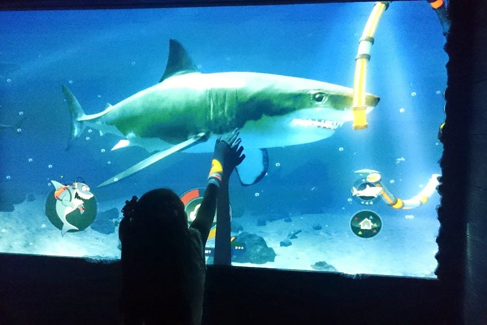 A young guest learns more about sharks via SEA LIFE's high-tech, interactive features