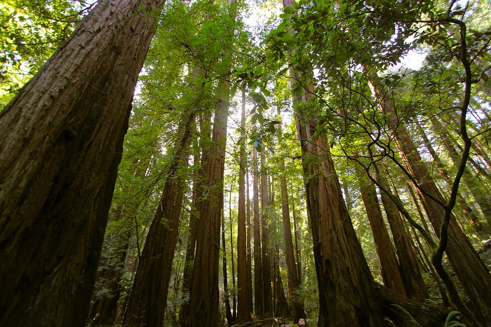 Muir Woods' ancient redwoods