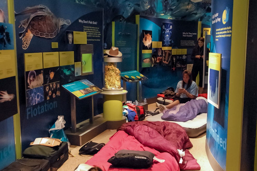 Smithsonian Sleepovers give patrons the opportunity to sleep in their favorite museums