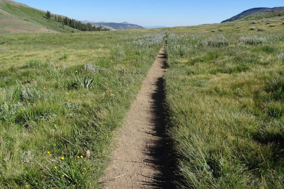 The Tahoe Rim Trail covers 165 miles and crosses two states