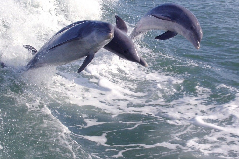 "See dolphins in their natural habitat on the ""Dolphin Racer"""