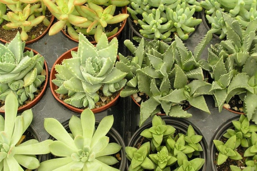 Exotic cacti and succulents will be on sale during Tohono Chul Park's summer Monsoon Madness Plant Sale