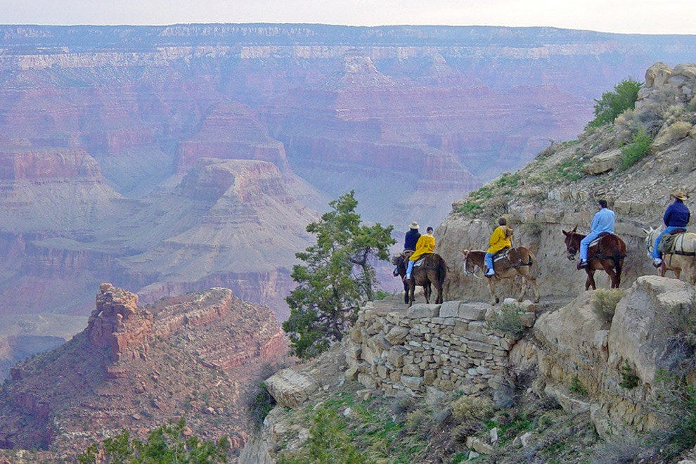 Ride Down the Grand Canyon by Mule