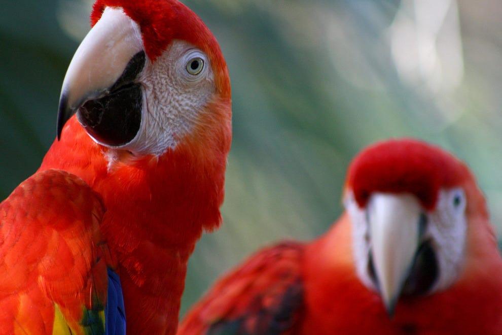 布雷瓦德动物园的金刚鹦鹉