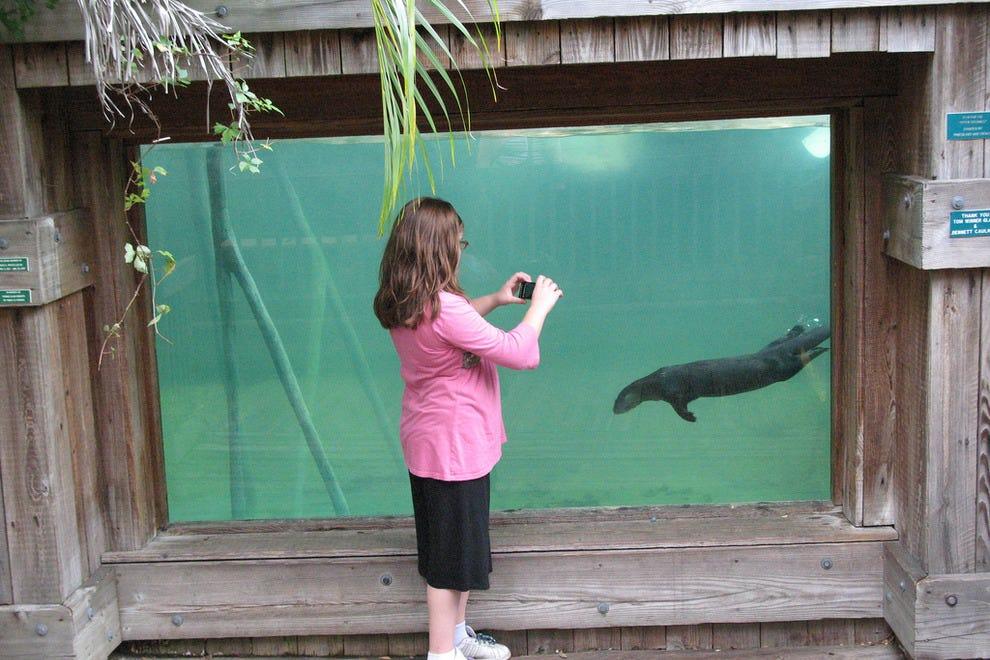 一位参观者为一个水下展览拍照。