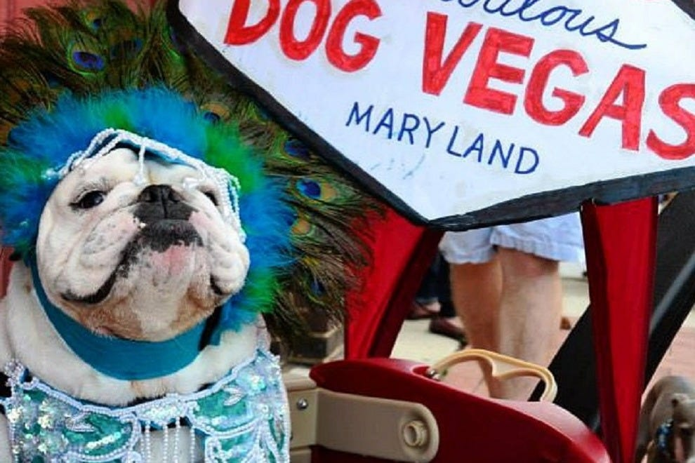 A costume contest is just one of the events happening during the Dog Days of Summer event in downtown Frederick