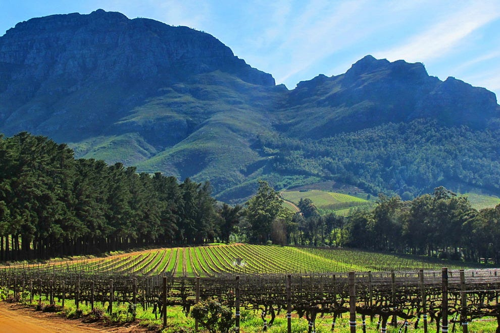 Stellenbosch boasts over 150 wine farms