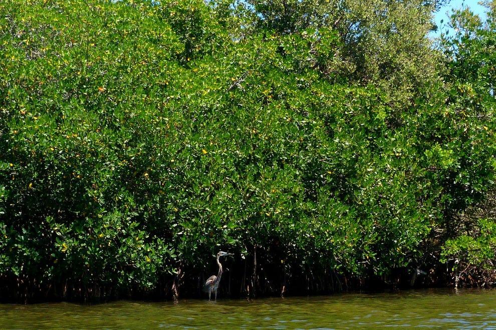 乘坐独木舟游览野生动物