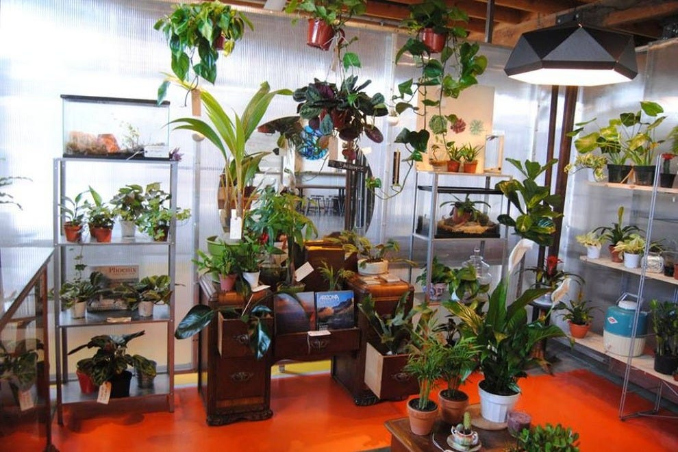 Pick up a potted cactus, succulent or other plant at The Bosque, a new downtown Phoenix shop
