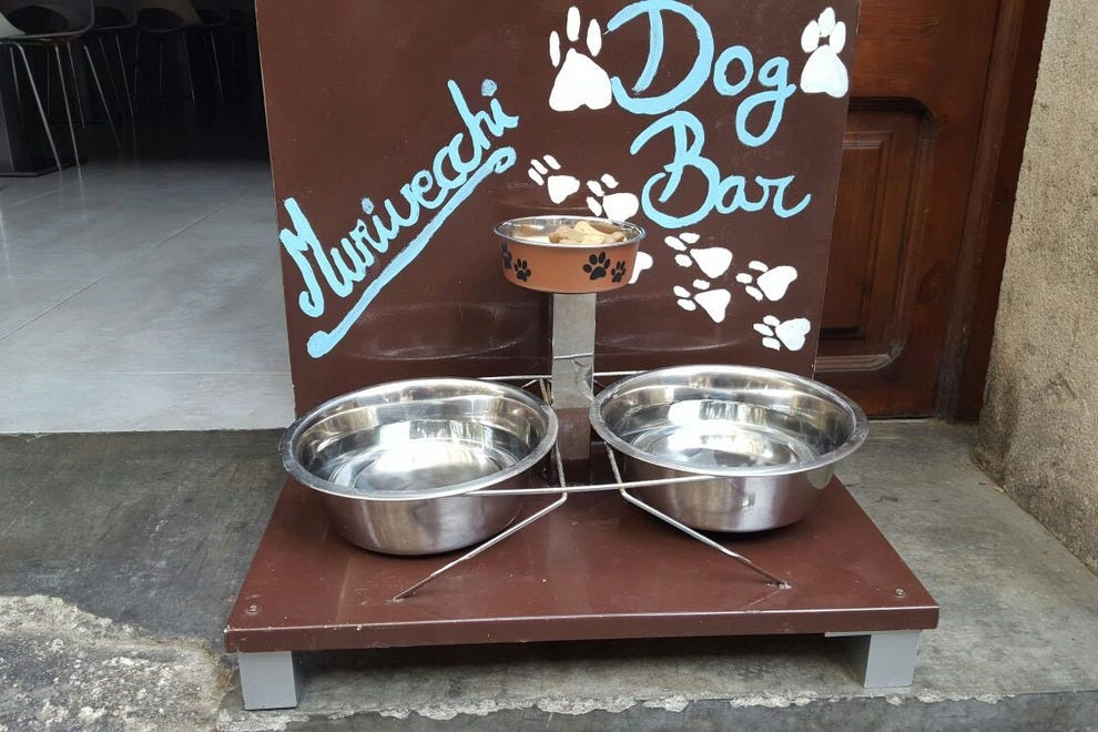 The dog bar is waiting and ready for dogs after their Park Ciutadella playtime
