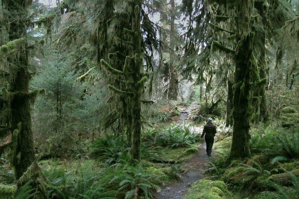 Hiking in the Hoh rainforest, the most silent place in the continental US