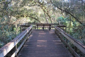 Turkey Creek Sanctuary: A Natural Escape in the Heart of Palm Bay