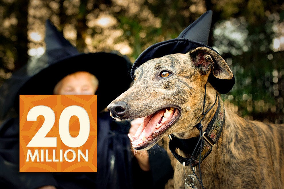 20 million people will dress up their pets in costume.