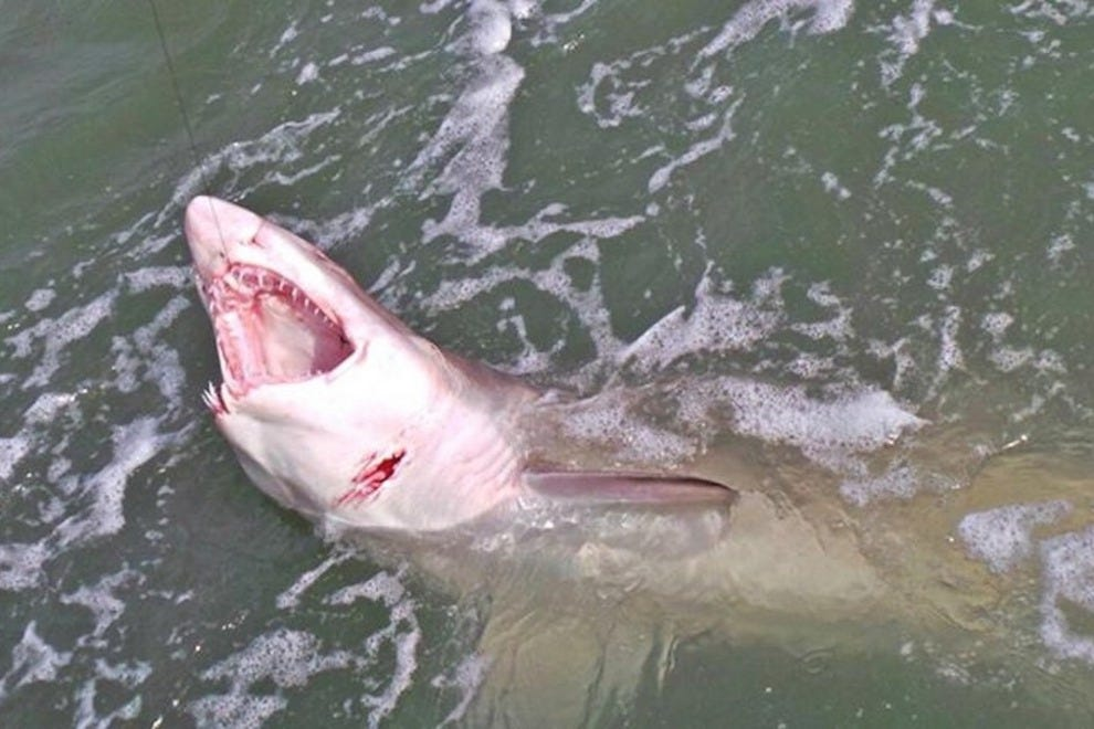 A shark in the waters near Cape Canaveral