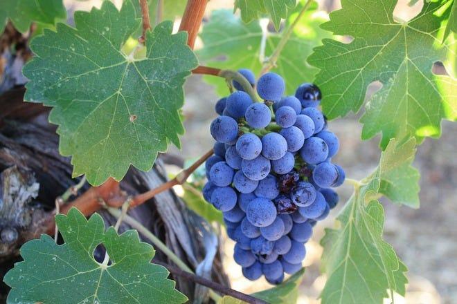 纳帕谷的酿酒厂和葡萄园