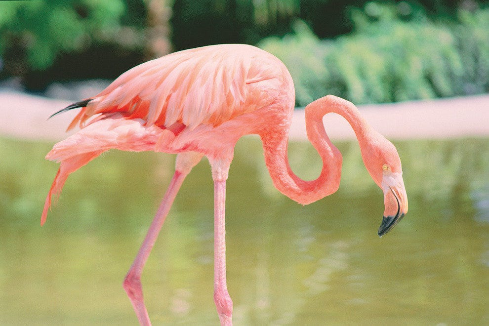 Nature Parks In Coral Springs