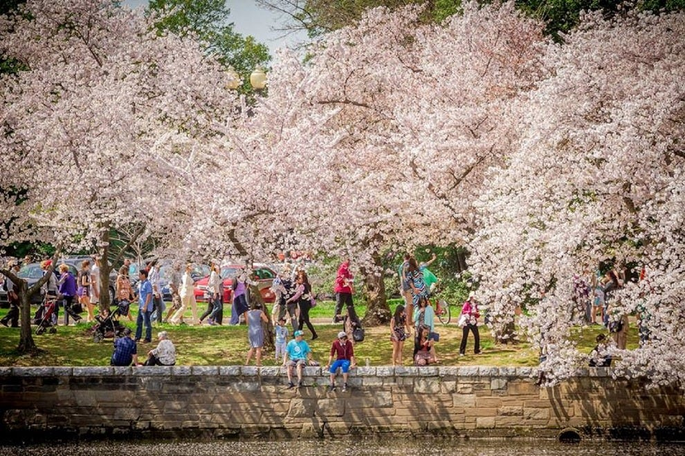 Residents along with tourists from all over the world come to D.C. to see the annual festival