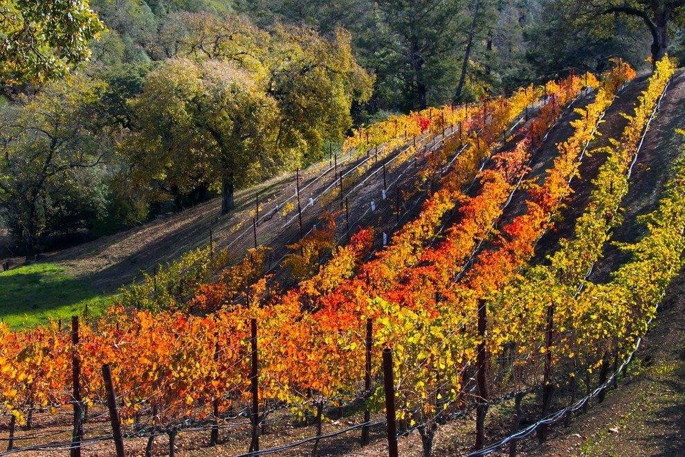 Sonoma's Glorious Wine Country, Right Outside Healdsburg's Door