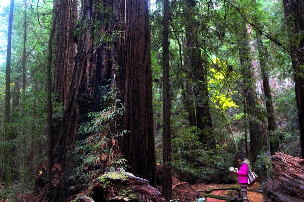 Giant Redwoods: A Nature Lover's Dream