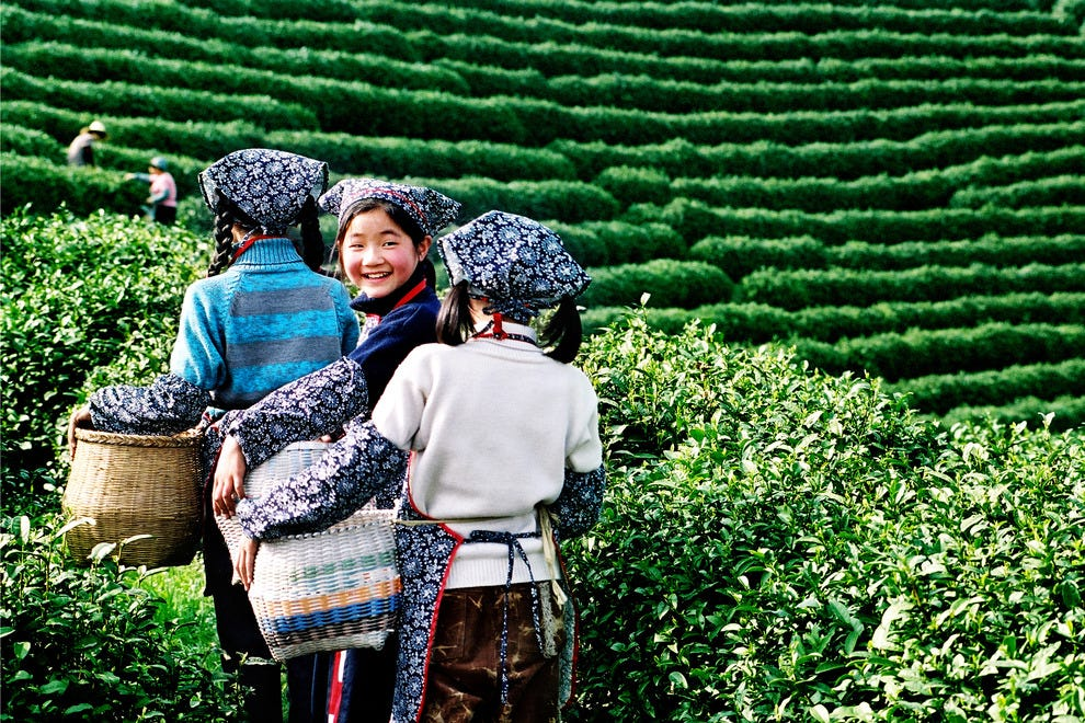 Workers at the tea plantation