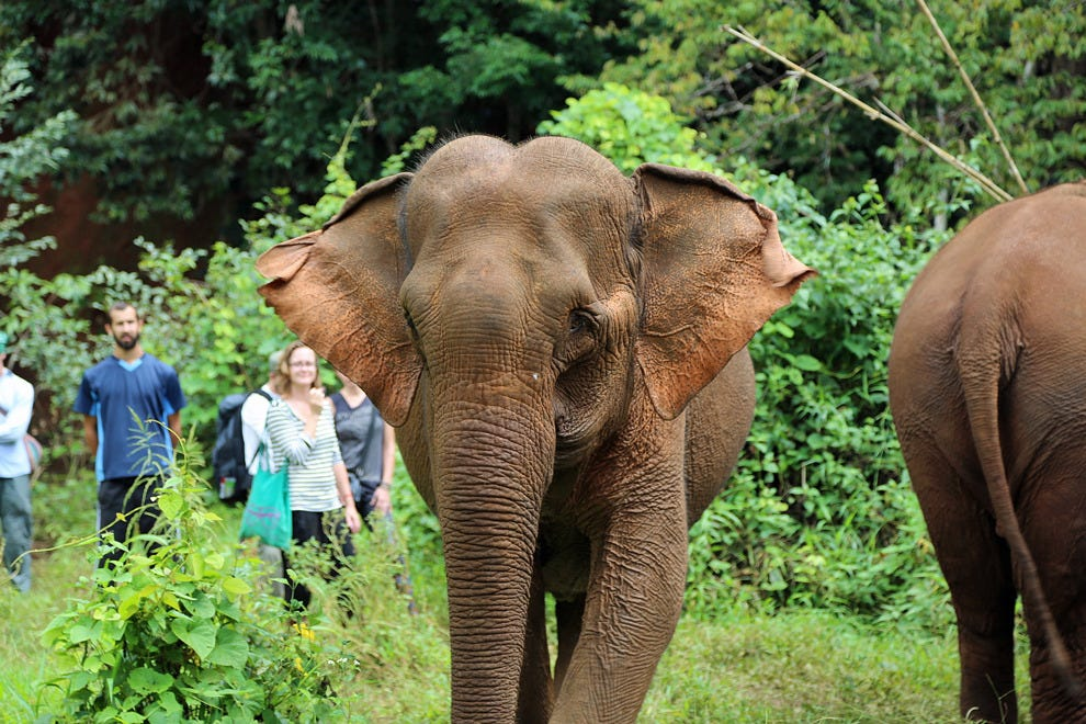 Working with rescued elephants